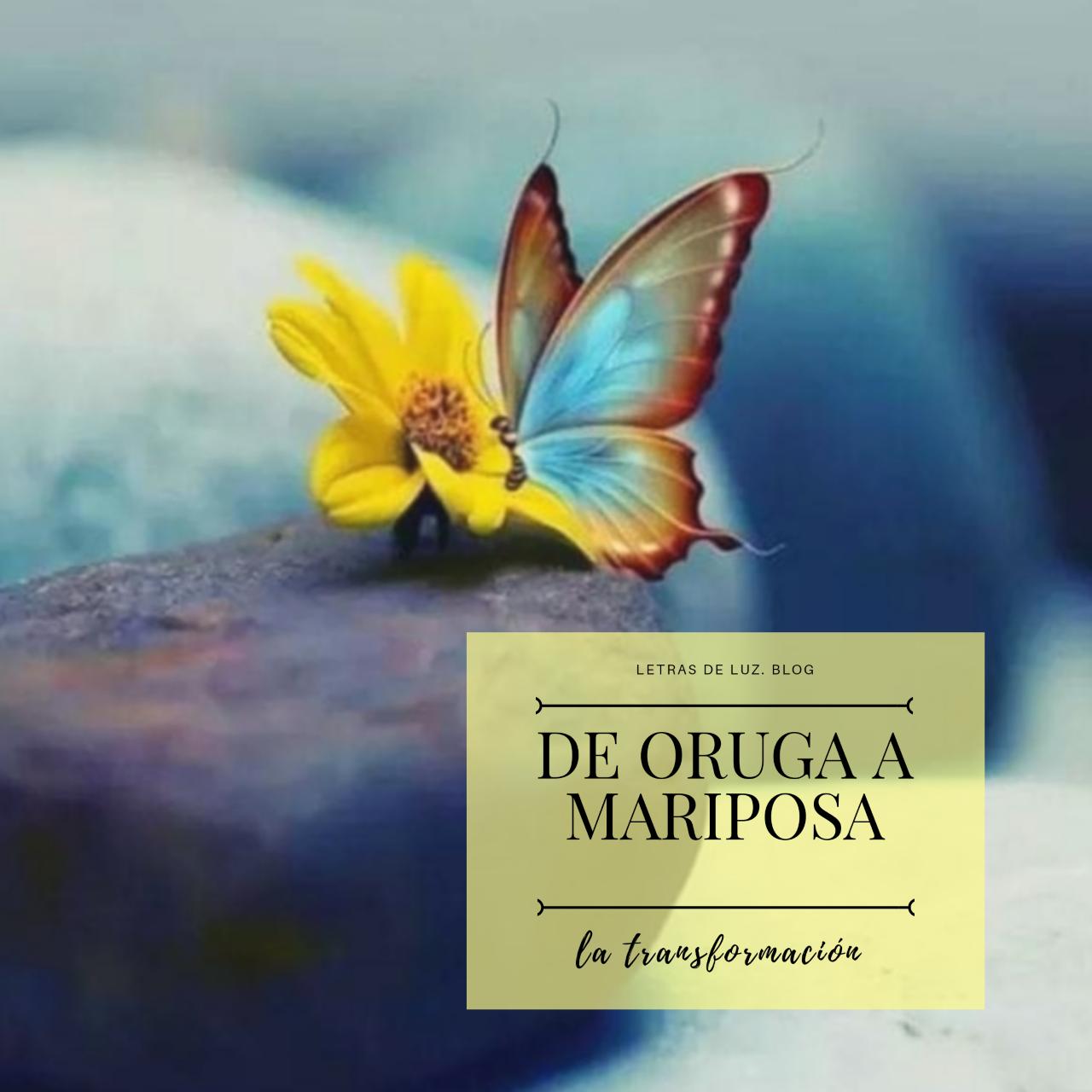 bonita mariposa azul con flor. Texto: de oruga a mariposa. La tranformación.